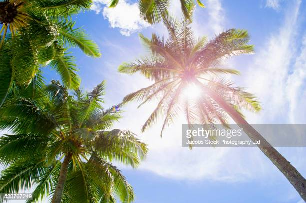 Low angle view of sunbeams and palm trees under blue sky