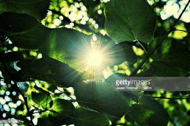 Low Angle View Of Sunlight Streaming Through Plant