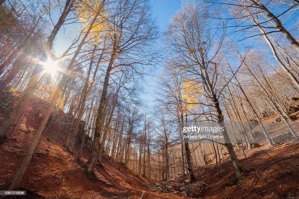 Low Angle View Of Sunlight Streaming Through Trees In Forest : Foto stock
