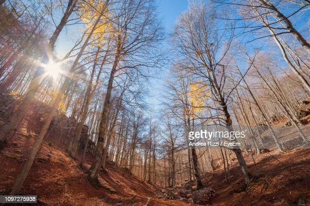 low angle view of sunlight streaming through trees in forest - andrea rizzi foto e immagini stock