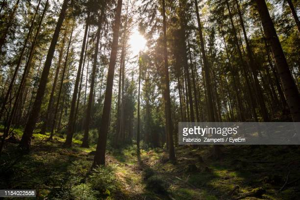low angle view of sunlight streaming through trees in forest - fabrizio zampetti foto e immagini stock