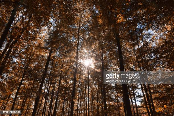 low angle view of sunlight streaming through trees in forest - andre wilms eyeem stock-fotos und bilder