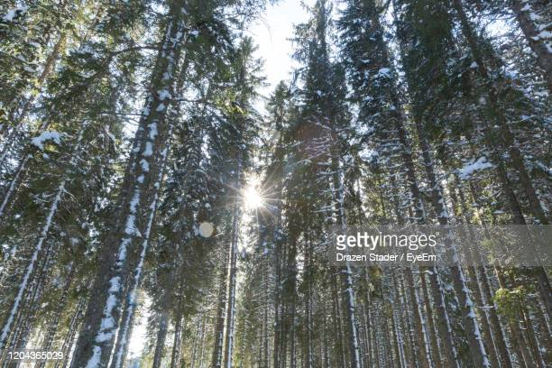 low angle view of sunlight streaming through trees in forest - drazen stock pictures, royalty-free photos & images
