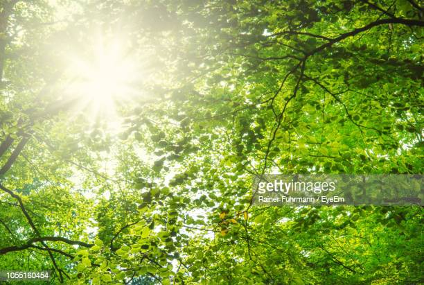 low angle view of sunlight streaming through trees - solar flare stock pictures, royalty-free photos & images