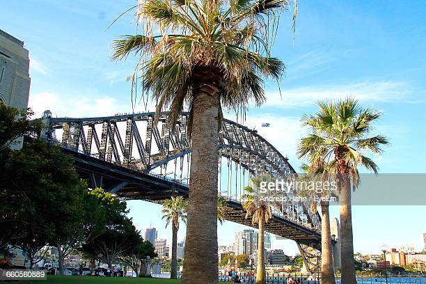 Low Angle View Of Sydney Harbor Bridge By Palm Trees Against Sky