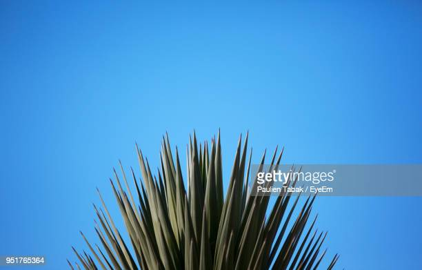 low angle view of tall grass against clear blue sky - paulien tabak stock pictures, royalty-free photos & images