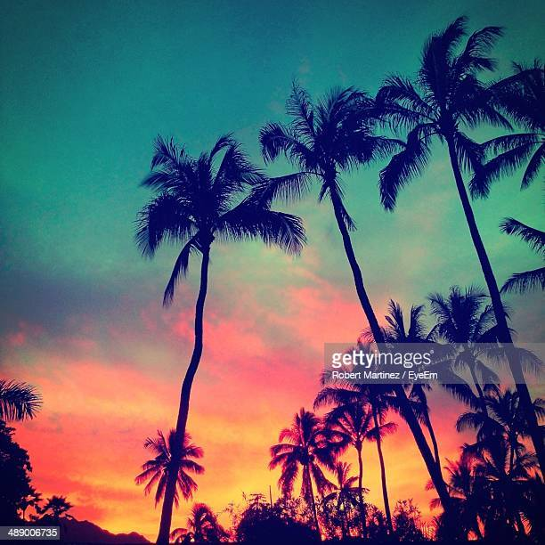 Low angle view of tall palm trees during dusk