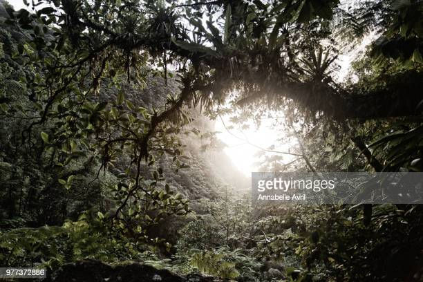 low angle view of thick forest vegetation, amazon rainforest, peru - amazon rainforest stock pictures, royalty-free photos & images