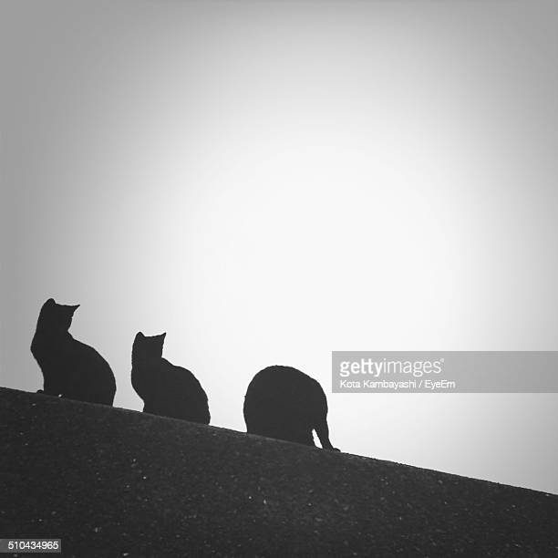 Low angle view of three silhouette cats against clear sky