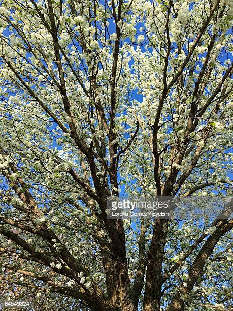 low angle view of tree against blue sky - lorena gomez fotografías e imágenes de stock
