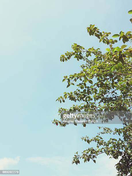low angle view of tree against blue sky - 枝 ストックフォトと画像