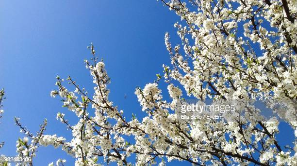 low angle view of tree against blue sky - ella bello stock-fotos und bilder
