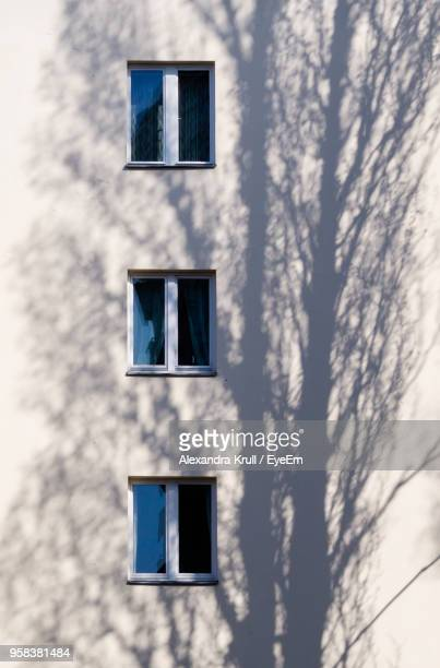 low angle view of tree against building - alexandra krull stock-fotos und bilder