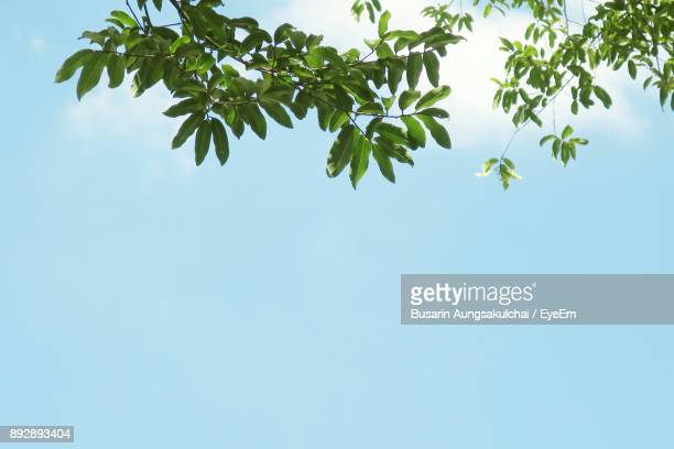 low angle view of tree against clear blue sky - clear sky foto e immagini stock