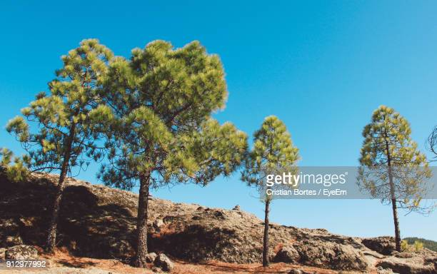 low angle view of tree against clear blue sky - bortes cristian stock photos and pictures