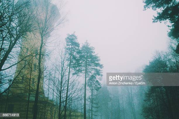 low angle view of tree against clear sky in foggy weather - zinchenko stock pictures, royalty-free photos & images