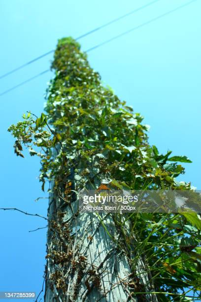 low angle view of tree against clear sky - klein stock pictures, royalty-free photos & images
