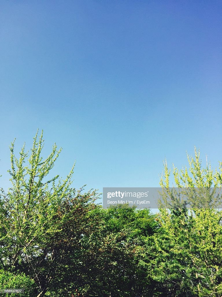 Low Angle View Of Tree Against Clear Sky : Stock Photo