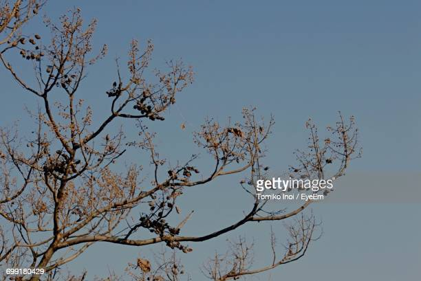 low angle view of tree against clear sky - tomiko inoi ストックフォトと画像