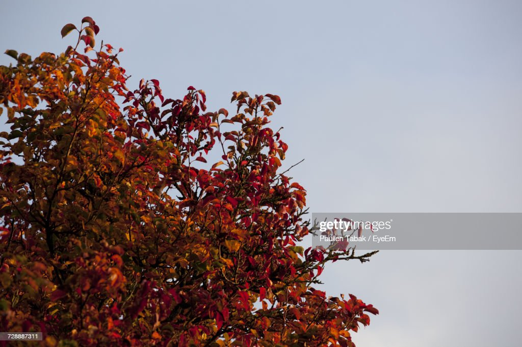 Low Angle View Of Tree Against Clear Sky : Stockfoto