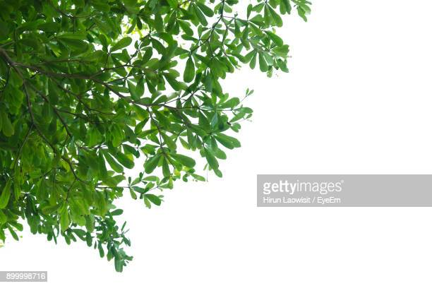 low angle view of tree against clear sky - branch stock pictures, royalty-free photos & images