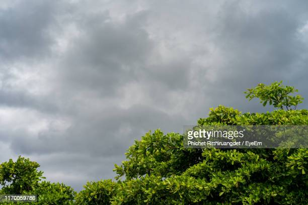 low angle view of tree against cloudy sky - phichet ritthiruangdet stock photos and pictures