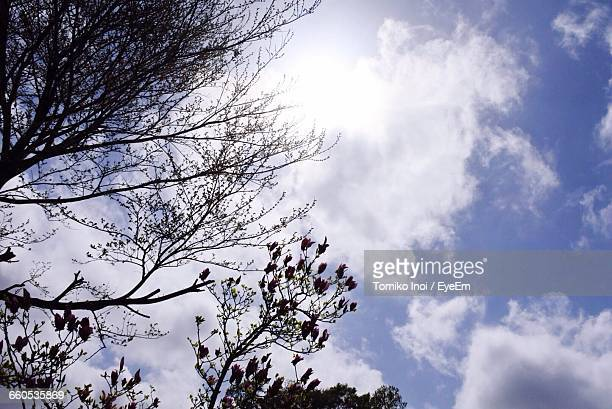low angle view of tree against cloudy sky - tomiko inoi ストックフォトと画像