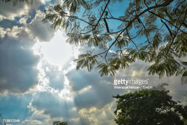 Low Angle View Of Tree Against Cloudy Sky