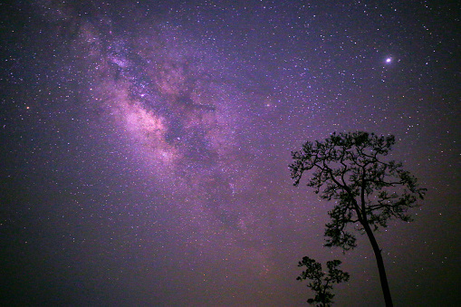 Low Angle View Of Tree Against Sky At Night - gettyimageskorea