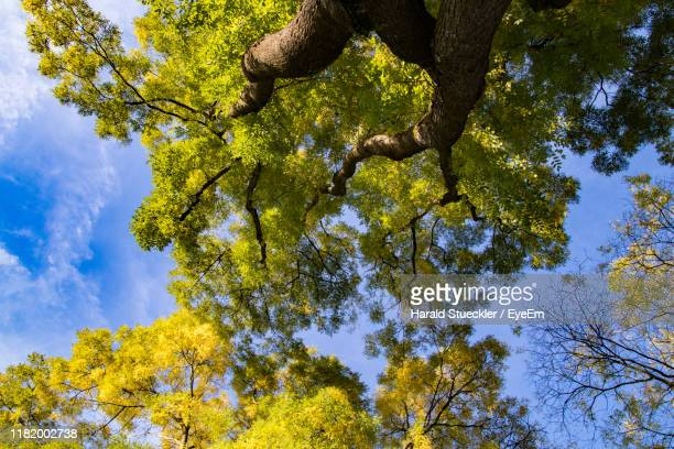 low angle view of tree against sky during autumn - sotto foto e immagini stock