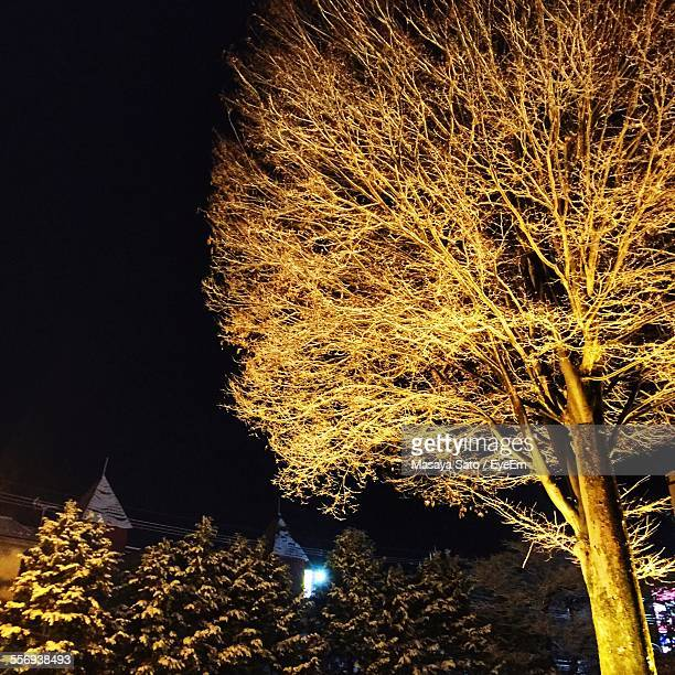 low angle view of tree against sky during night - maebashi city stock photos and pictures