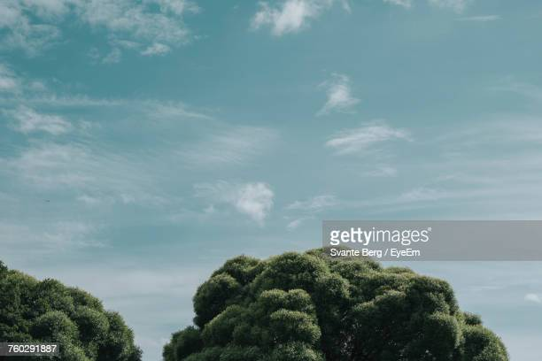 Low Angle View Of Tree Against Sky During Sunny Day
