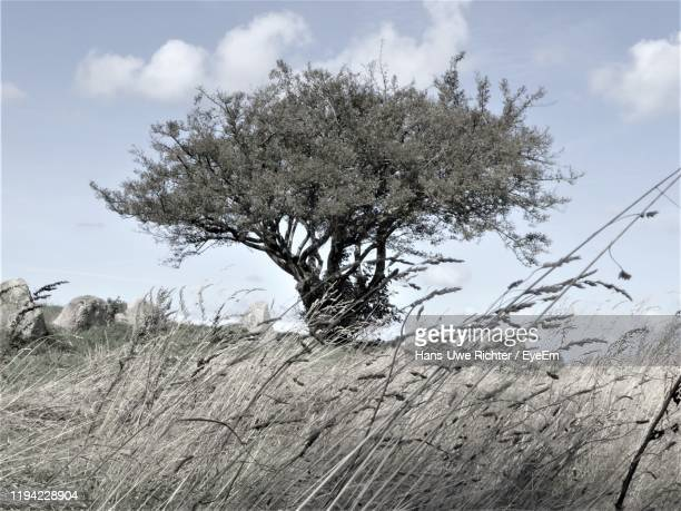 low angle view of tree against sky during winter - insel stock pictures, royalty-free photos & images