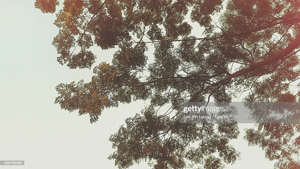 Low Angle View Of Tree Against Sky In Forest : Foto stock