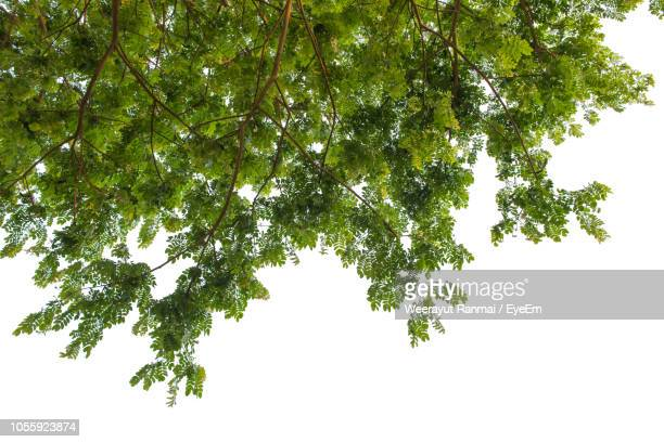 low angle view of tree against sky - branch stock pictures, royalty-free photos & images