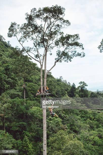 low angle view of tree against sky - bortes cristian stock-fotos und bilder