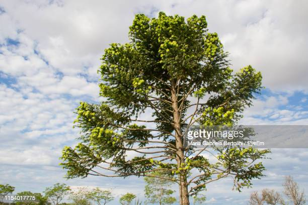 low angle view of tree against sky - gabriela stock pictures, royalty-free photos & images