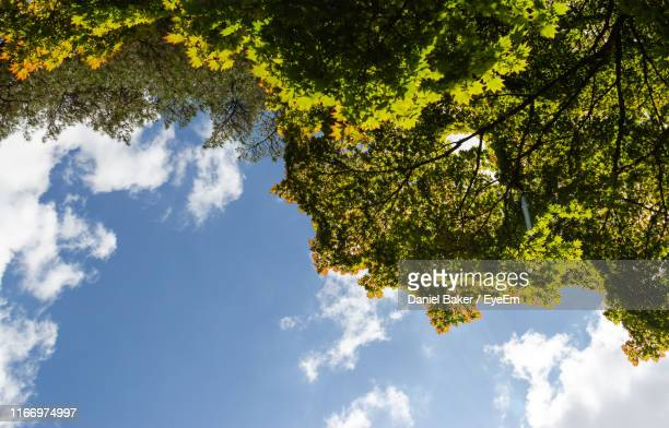 low angle view of tree against sky - tetbury stock pictures, royalty-free photos & images