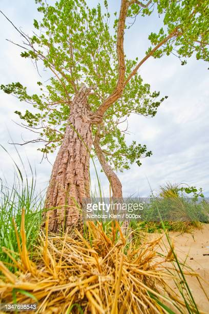 low angle view of tree against sky - klein stock pictures, royalty-free photos & images
