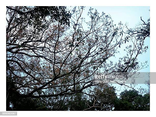 low angle view of tree against sky - hong quan stock pictures, royalty-free photos & images