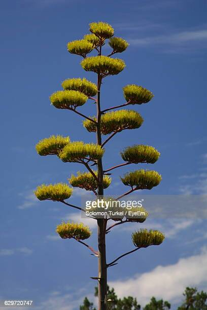 low angle view of tree against sky - solomon turkel stock pictures, royalty-free photos & images