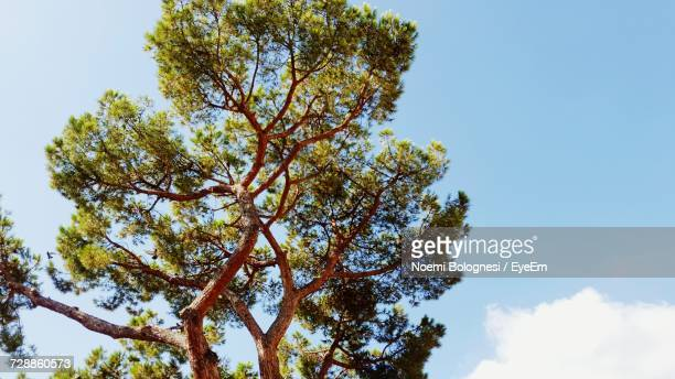 low angle view of tree against sky - noemi foto e immagini stock