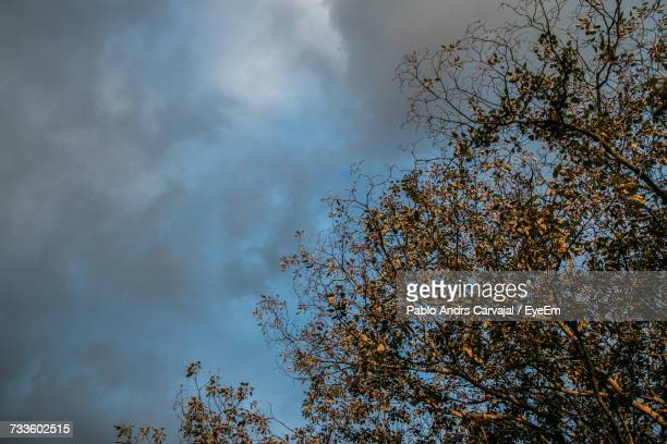 low angle view of tree against sky - carvajal ストックフォトと画像
