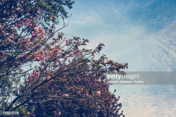 low angle view of tree against sky - albrecht schlotter foto e immagini stock