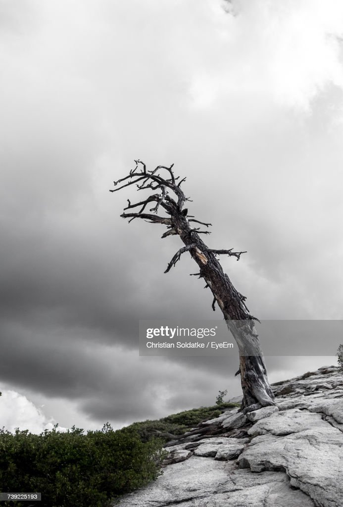 Low Angle View Of Tree Against Sky : Stock Photo