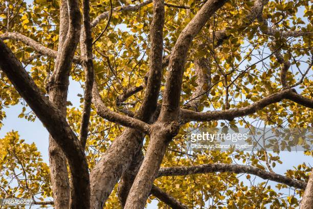 low angle view of tree against sky - chanayut stock photos and pictures