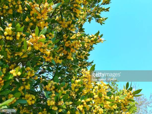 low angle view of tree against sky - hilal stock photos and pictures