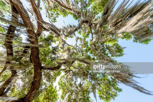low angle view of tree against sky,inverness,florida,united states,usa - norbert zingel stock-fotos und bilder