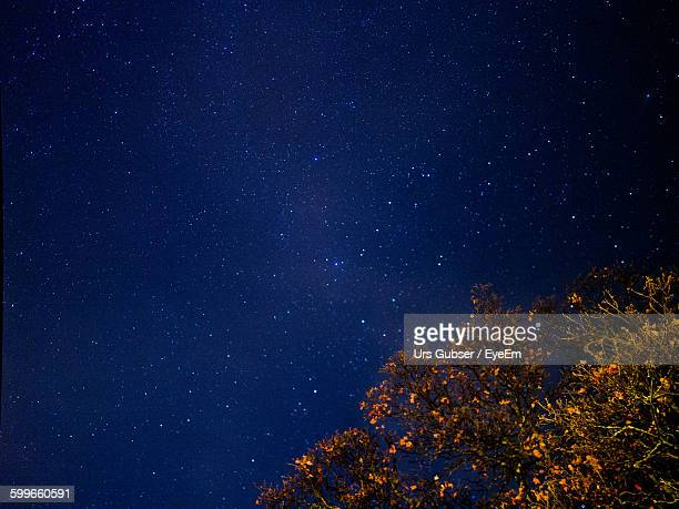 Low Angle View Of Tree Against Star Field At Night