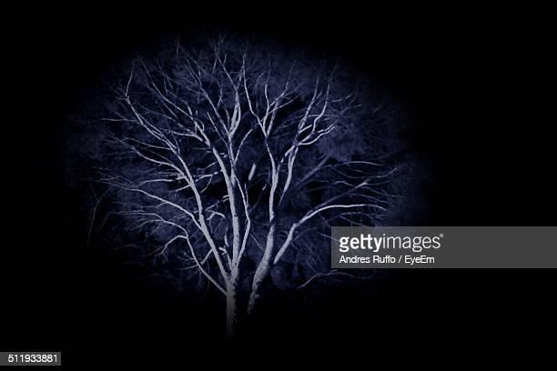 low angle view of tree at night - andres ruffo stock-fotos und bilder